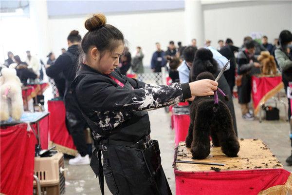 天津宠物美容培训